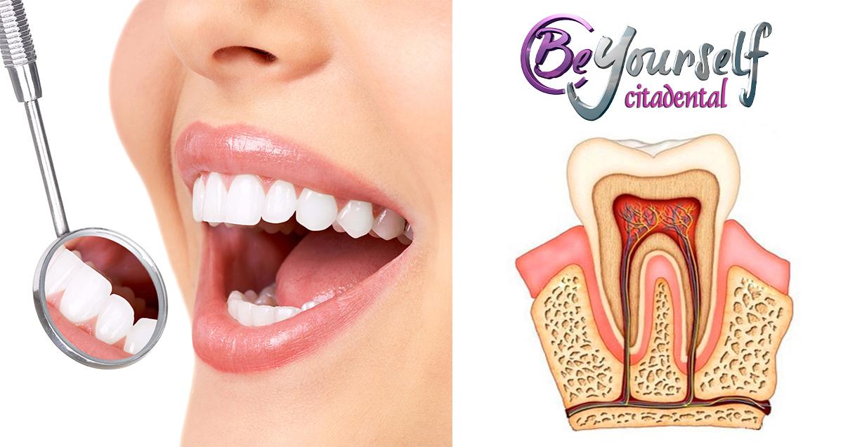 Conoces las diferentes partes y capas de una pieza dental? | Blog ...